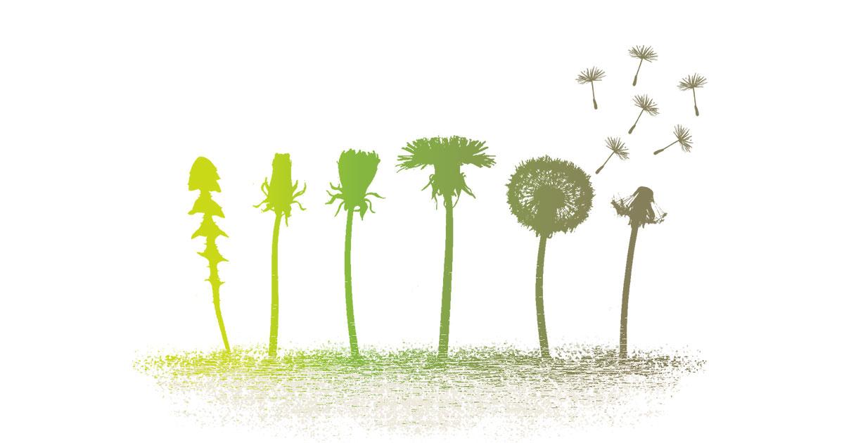 """""""Les murmures des plantes"""" (balade poétique et musicale)"""