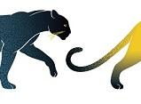 """""""Lion, tigre, guépard et compagnie"""""""