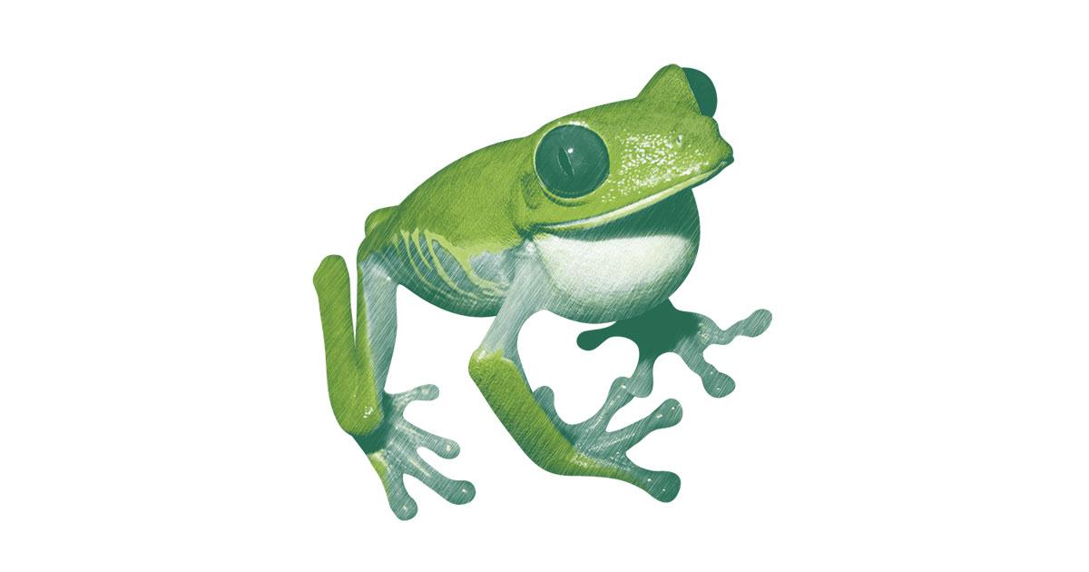 """""""Du têtard à la grenouille"""""""