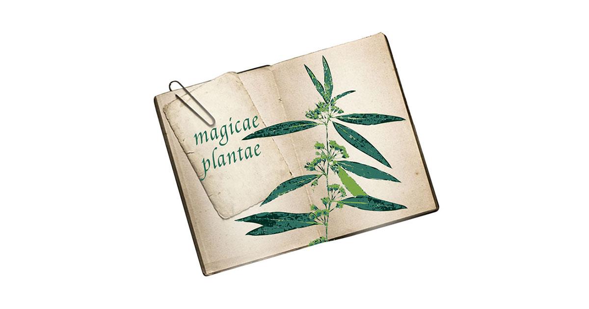 """""""Mon herbier de plantes magiques"""""""
