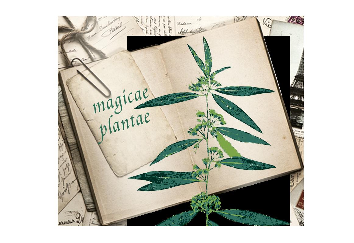 """""""Plantes médicinales - Infusions des savoirs"""""""